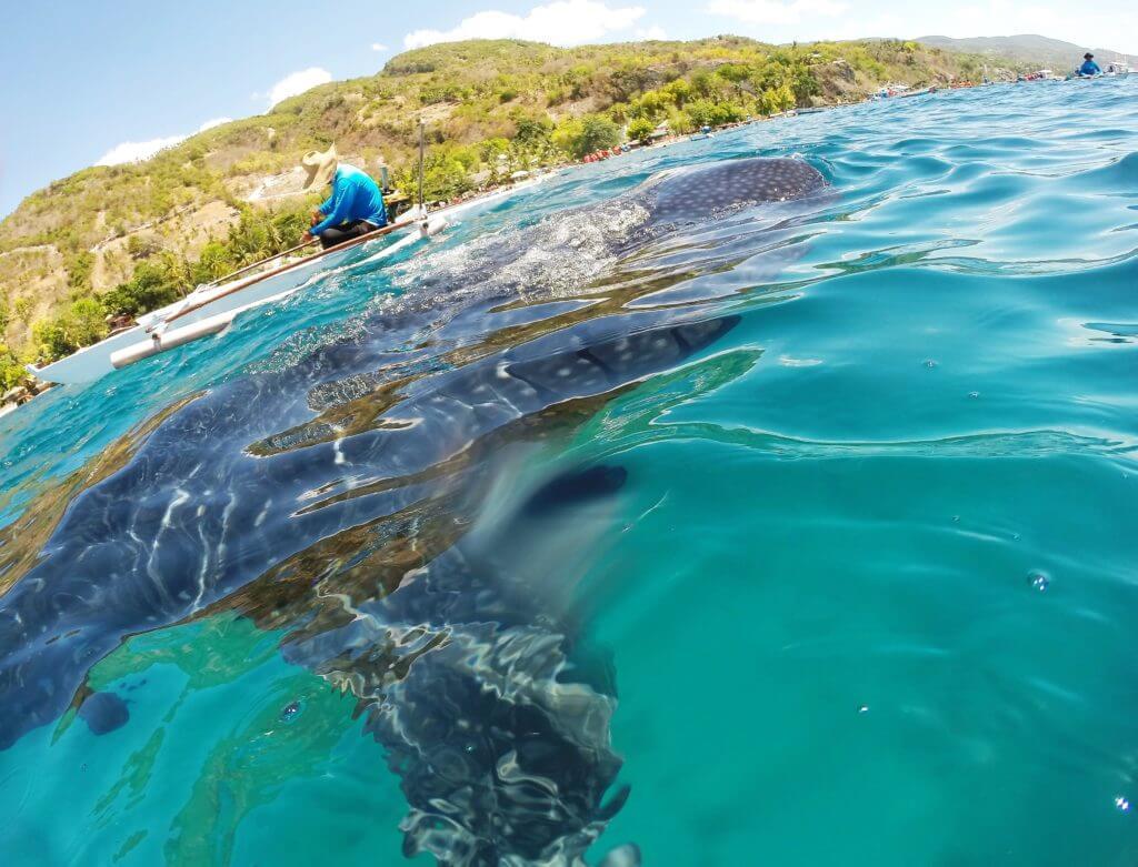 Walhaie Oslob