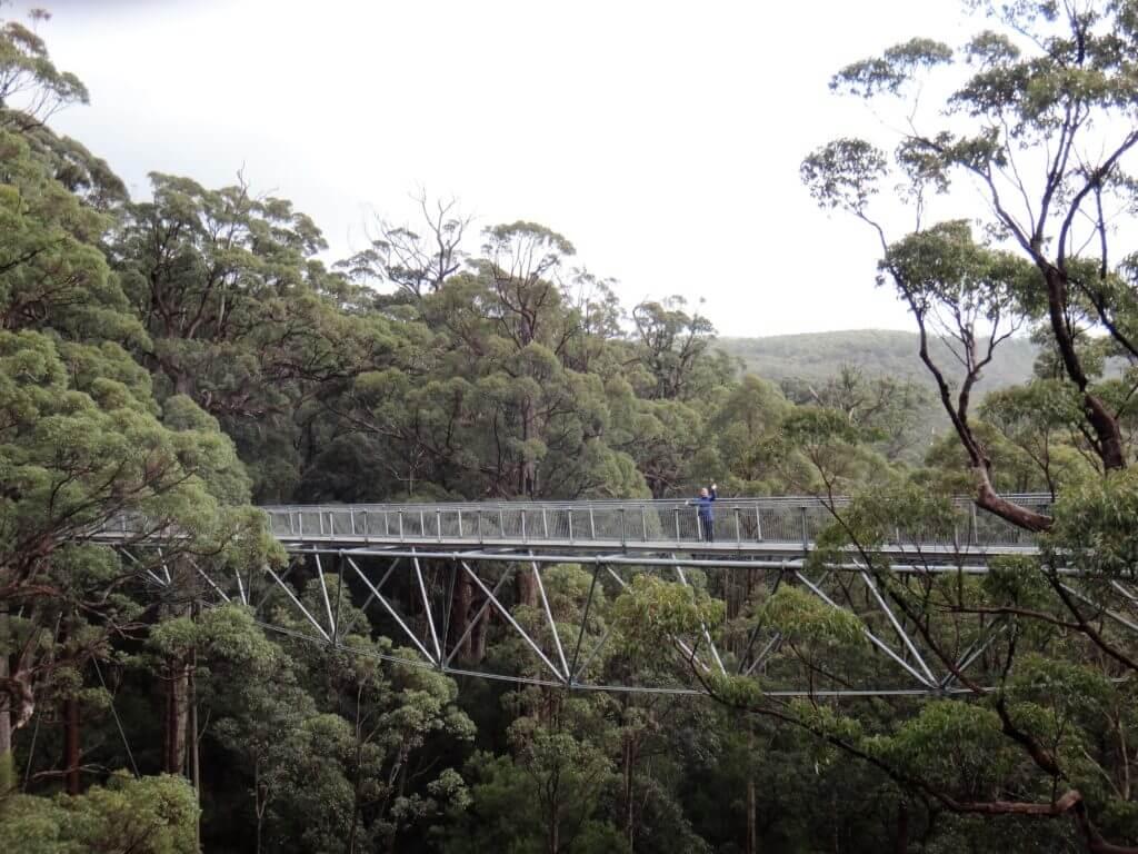 Tree Top Walk-Westaustralien