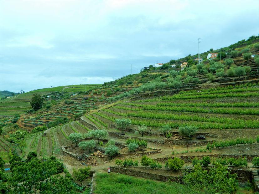 Douro Region - 3 Wochen Portugal