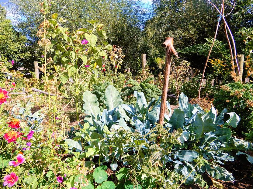 Gartenbau auf der Pinke Panke