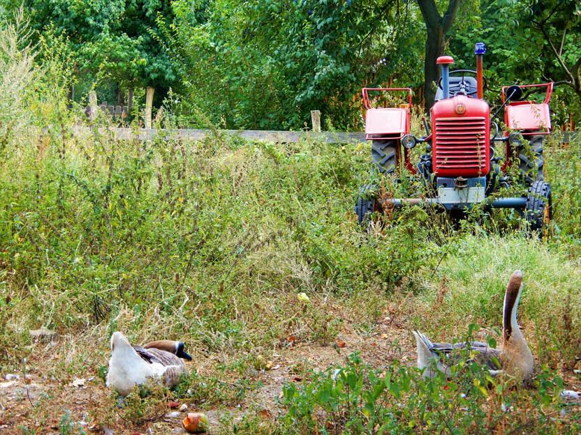 Traktor auf der Pinke Panke