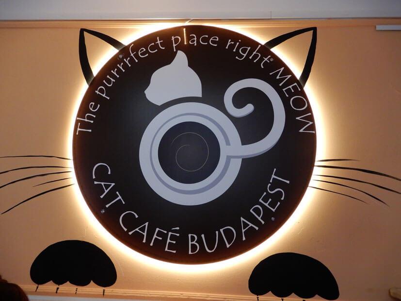 Budapest Sehenswürdigkeiten Katzencafé