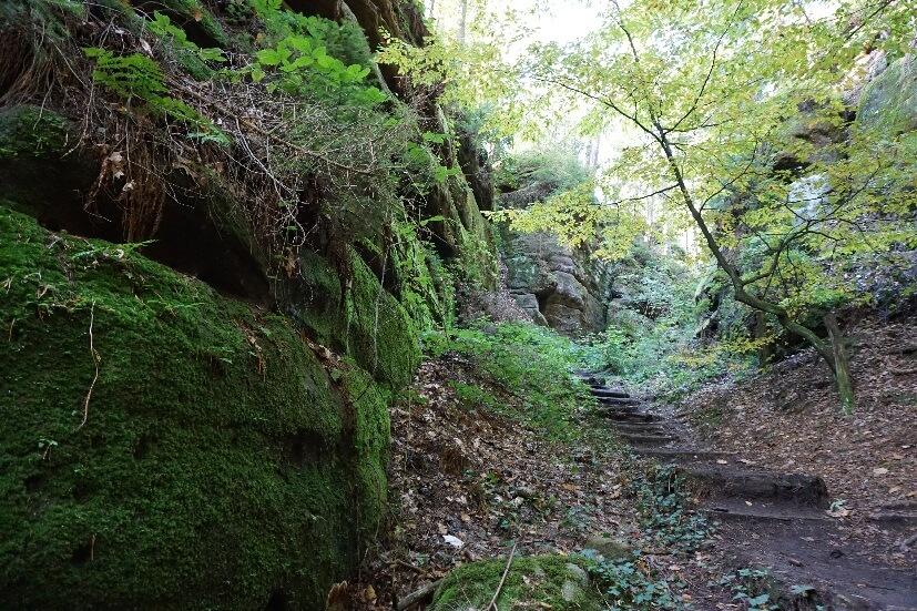 bergab wandern im Wald