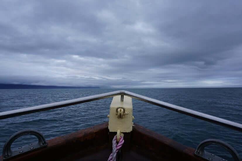Walbeobachtungstour in Island Husavik