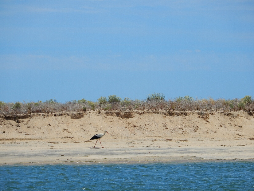 Storch am Strand