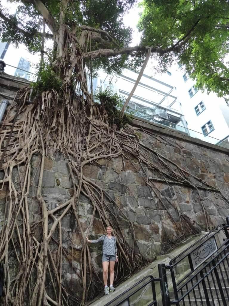 kurioser Baum
