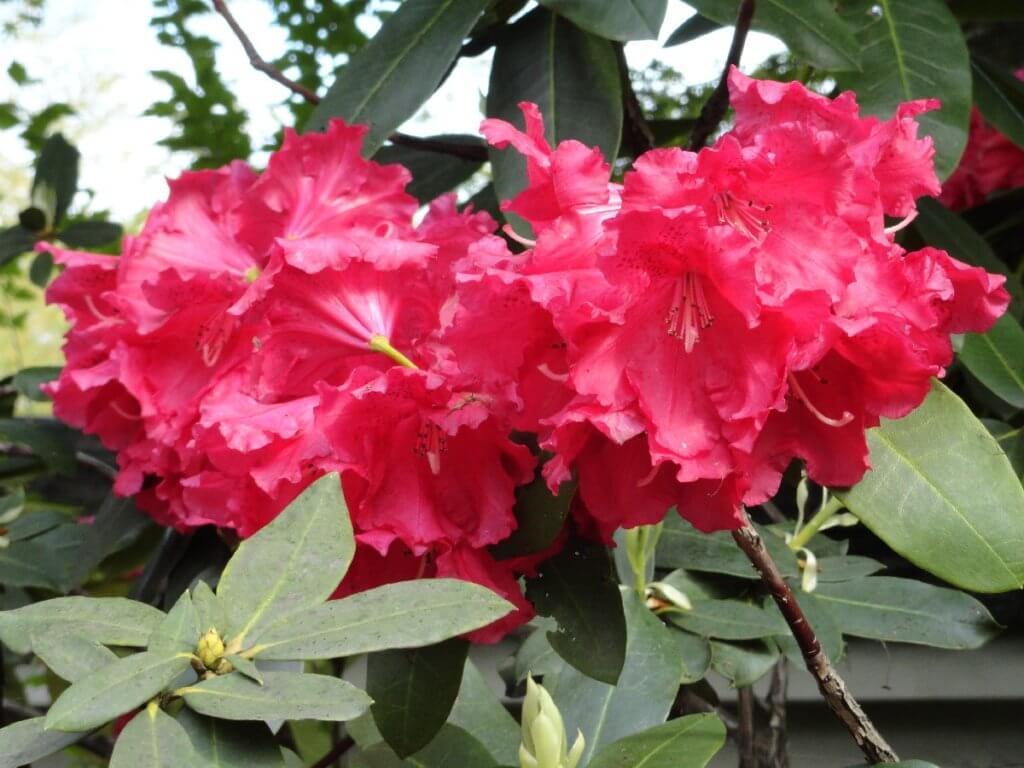 Blüten Koko-en Garten