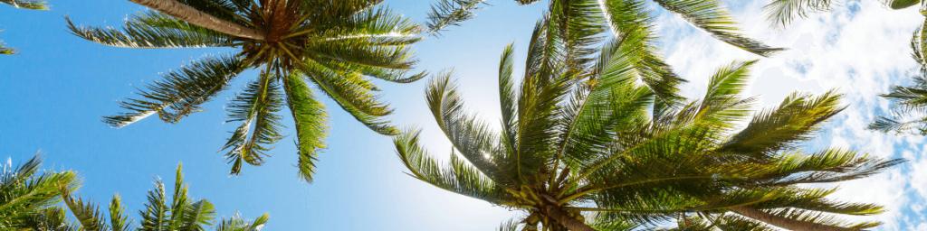 tropische auszeit palmen