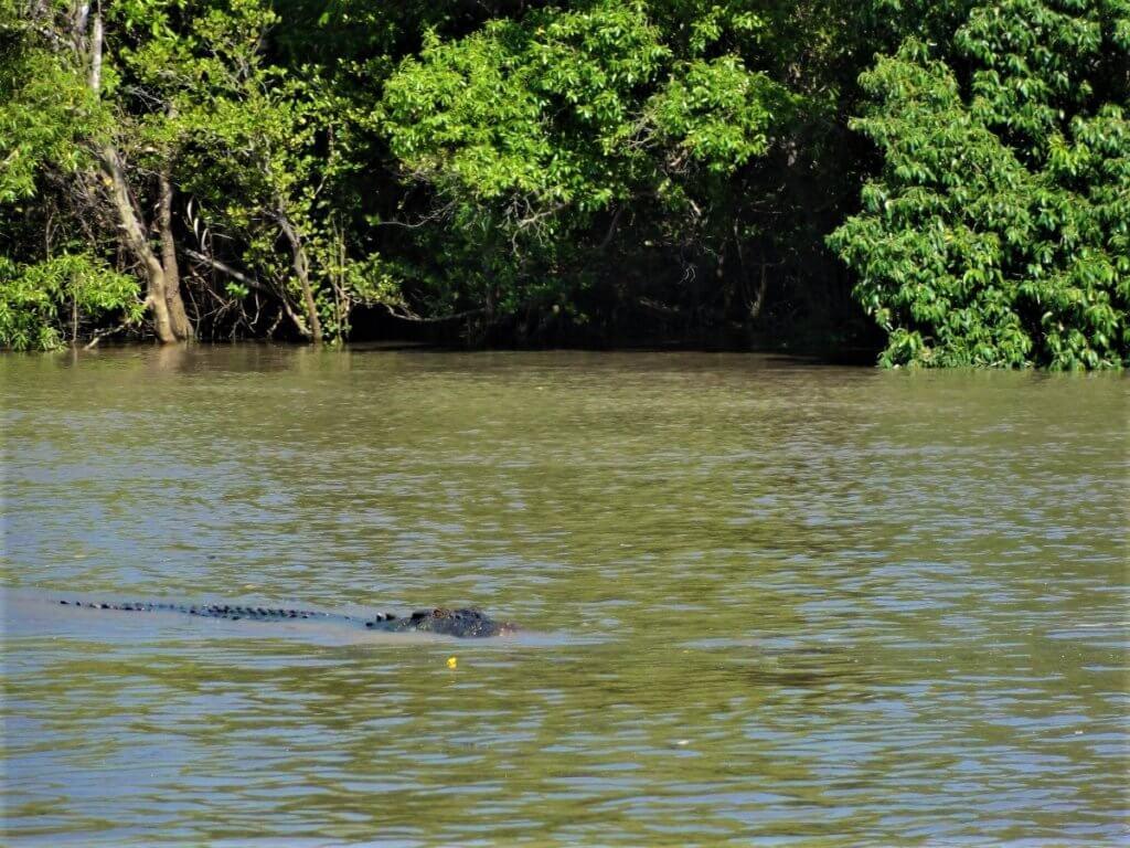Krokodile im Adelaide River