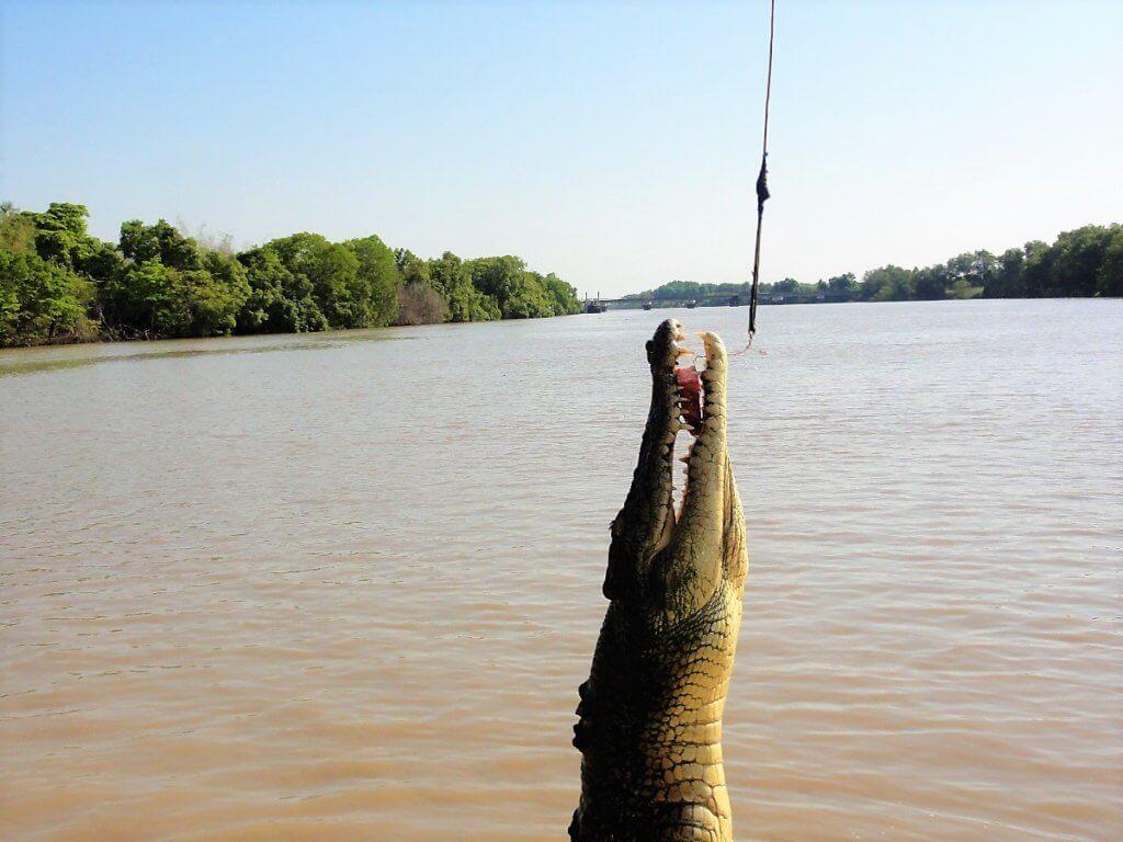 springende Krokodile