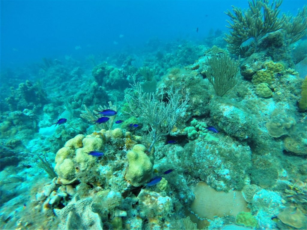 Unterwasser Maria la Gorda Kuba