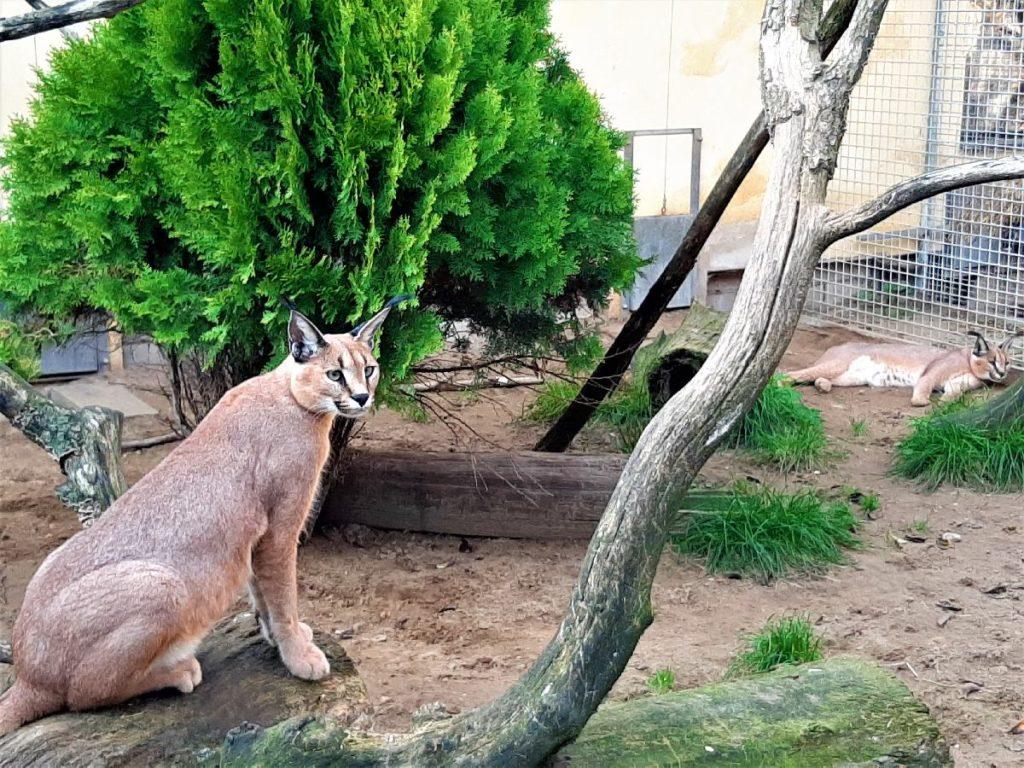 Wildkatzenzentrum Barnim