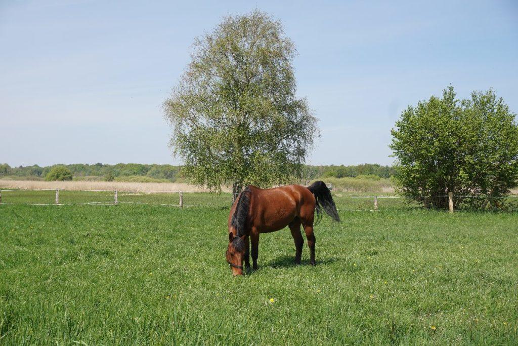 Pferdekoppeln