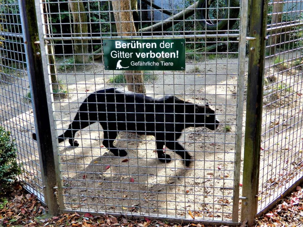 Gehege Wildkatzenzentrum