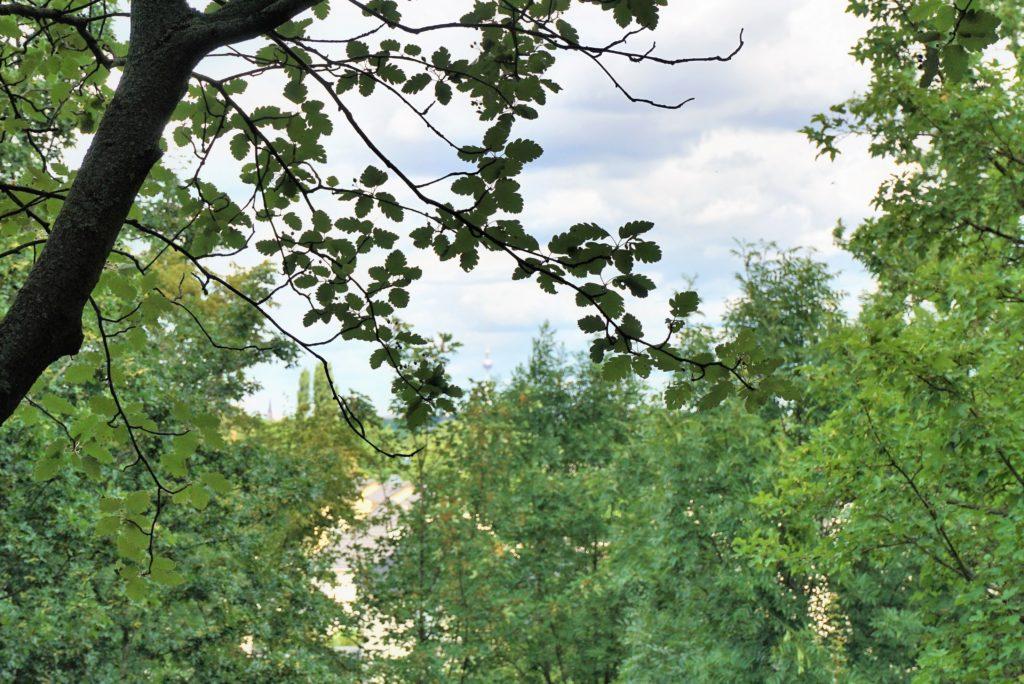versteckter Fernsehturm Aussicht vom Britzer Garten