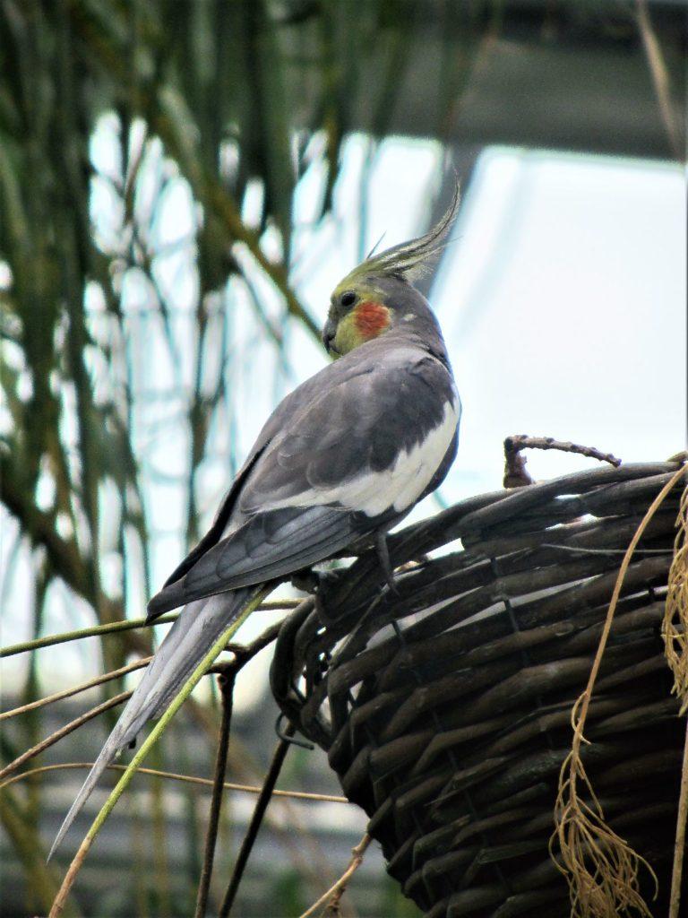 Vogel in der Tropenhalle
