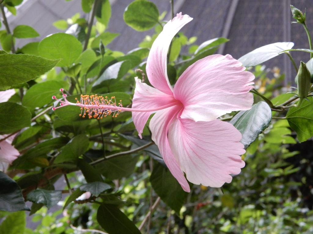 Pflanzenwelt im Tropical Islands