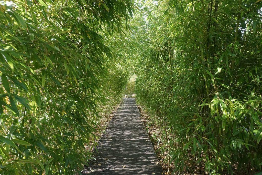 Bambusweg - chinesisches Gartenkabinett