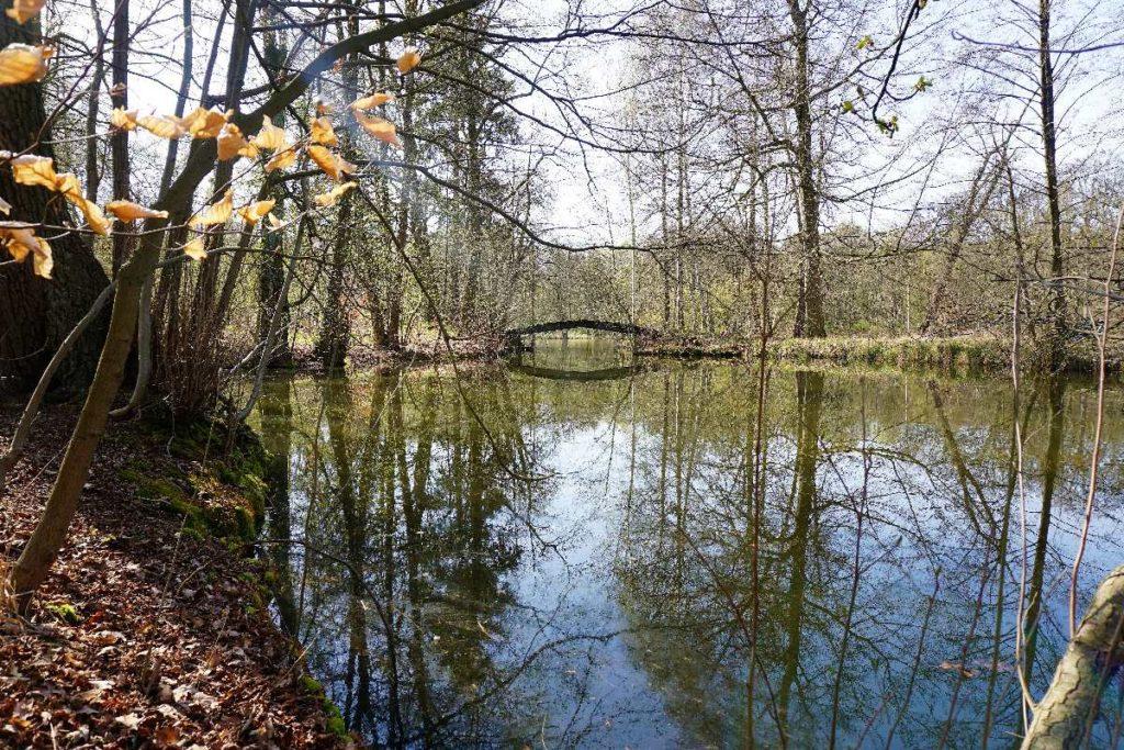 Waldgebiet nahe vom Schloss Dammsmühle