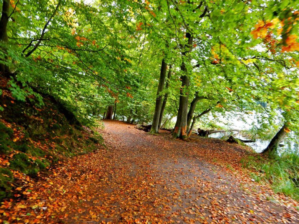 Herbstwanderung am Liepnitzsee