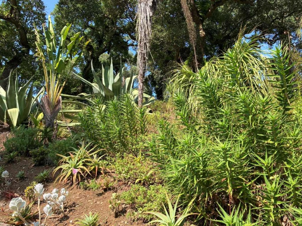 mexikanischer Garten