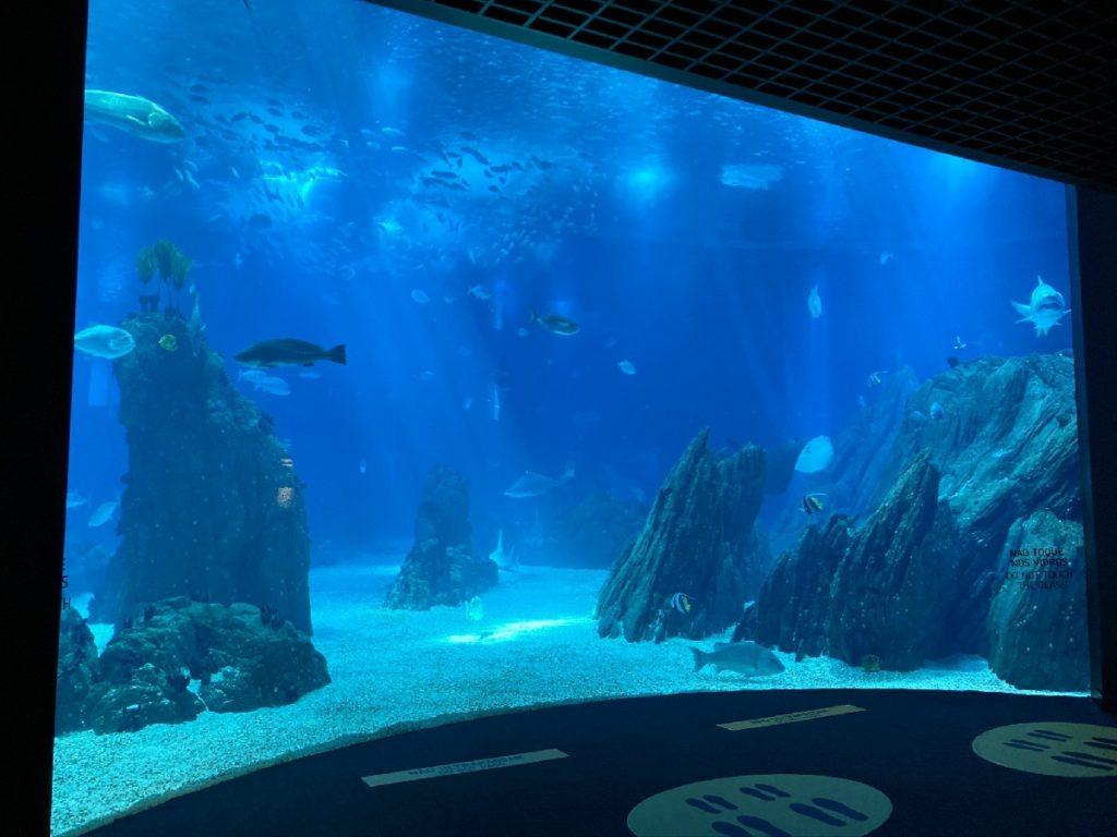 Ozeanarium Lissabon Parque das Nacoes