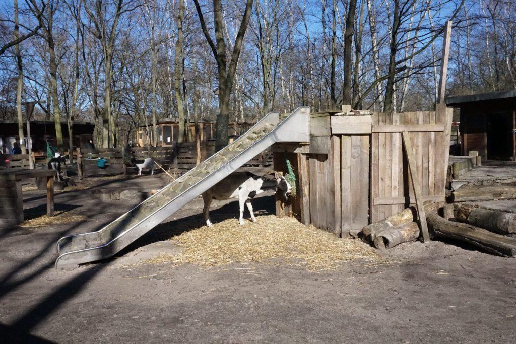 Ziegen- und Hasenhof