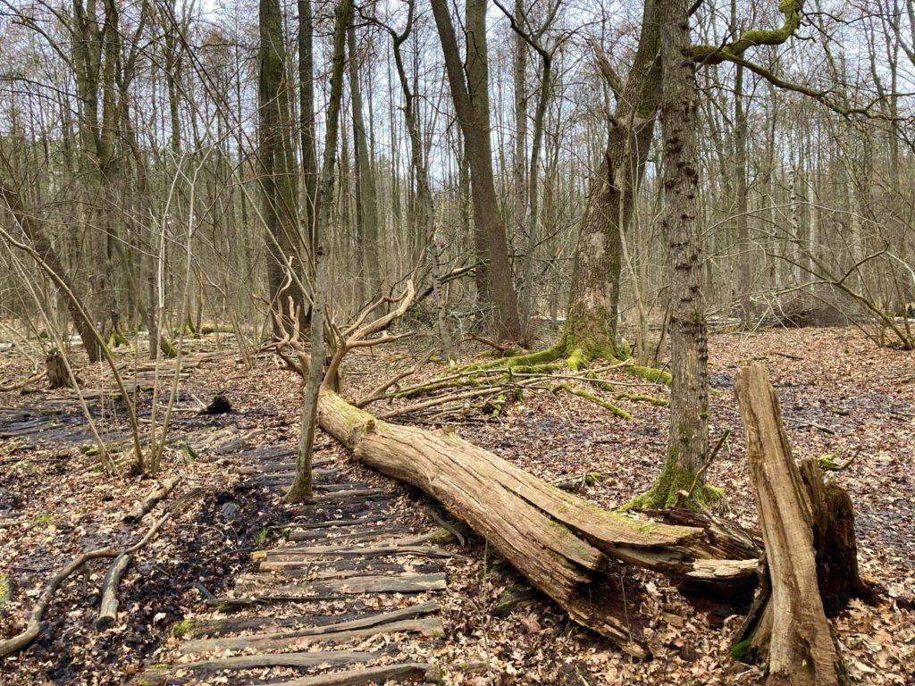 Bucher Forst