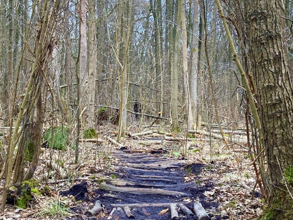 abenteuerlicher Waldpfad Bucher Forst